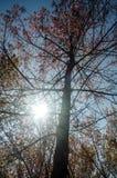 Het bos van de zon glanzende herfst Stock Foto