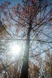 Het bos van de zon glanzende herfst Royalty-vrije Stock Fotografie