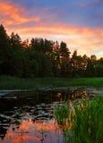 Het bos van de zonsondergang Stock Afbeeldingen