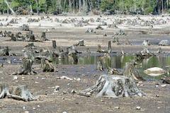 Het bos van Destructed royalty-vrije stock fotografie