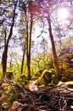 Het bos van Dreamlike Royalty-vrije Stock Foto's