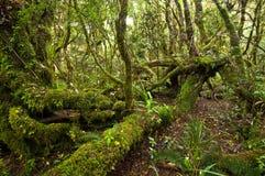 Het Bos van Erua stock afbeelding