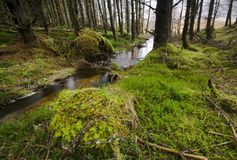 Het Bos van Etive van de nauwe vallei Stock Afbeeldingen