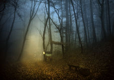 Het bos van feeën Royalty-vrije Stock Afbeeldingen