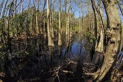 Het bos van Fisheye Royalty-vrije Stock Fotografie