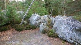Het Bos van Fontainebleau stock footage