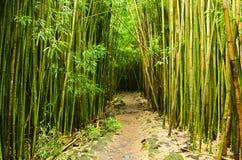 Het bos van het bamboe Stock Fotografie