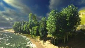 Het bos van het bamboe Royalty-vrije Stock Foto