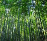 Het Bos van het bamboe royalty-vrije stock afbeeldingen