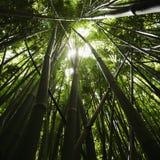 Het bos van het bamboe. Royalty-vrije Stock Foto's