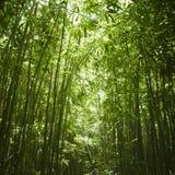 Het bos van het bamboe. Stock Foto