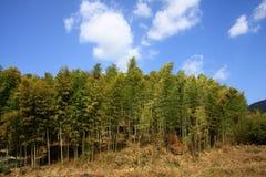 Het bos van het bamboe Stock Afbeelding