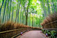 Het bos van het bamboe in Japan stock afbeeldingen