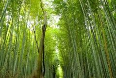 Het bos van het bamboe in Japan Stock Foto