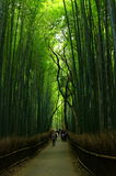 Het bos van het bamboe in Kyoto Stock Foto