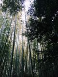 Het bos van het bamboe in Kyoto Royalty-vrije Stock Fotografie