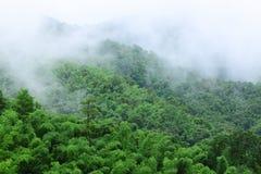 Het bos van het bamboe in regenachtig seizoen Stock Afbeeldingen