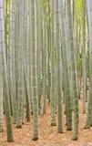 Het Bos van het Bamboe van Moso in Kamakura Japan Stock Foto