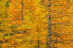 Het bos van het dalingsgebladerte royalty-vrije stock foto's