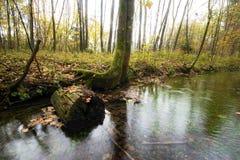 Het bos van het de herfstmoeras Stock Afbeelding