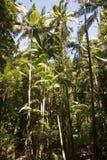 Het Bos van het Eiland van Fraser royalty-vrije stock foto