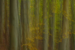 Het bos van het impressionisme Stock Foto