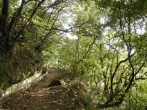 Het bos van het laurierrelict in Madera Stock Afbeeldingen