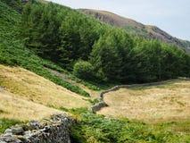 Het bos van het meerdistrict Royalty-vrije Stock Foto