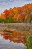 Het bos van het moerasland in daling Royalty-vrije Stock Afbeelding