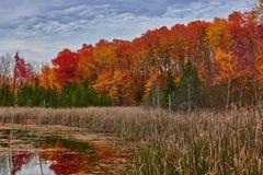 Het bos van het moerasland in daling Royalty-vrije Stock Foto's
