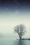 Het bos van het nachtmeer stock foto