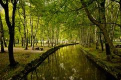 Het bos van het paradijs royalty-vrije stock fotografie