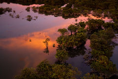 Het Bos van het Ratargulmoeras Stock Fotografie