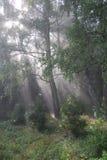 Het bos van het sprookje. royalty-vrije stock foto