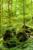 Het bos van het sprookje Royalty-vrije Stock Foto