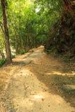 Het bos van het wegbamboe Royalty-vrije Stock Foto