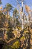 Het bos van het wildernislandschap met pijnboombomen en mos op rotsen Royalty-vrije Stock Foto