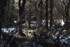 In het bos van Himalayagebergte Stock Foto