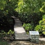 Het bos van Jozani royalty-vrije stock foto