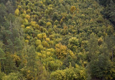 Het bos van Karlstejin royalty-vrije stock fotografie