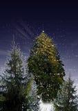 Het bos van Kerstmis Royalty-vrije Stock Foto
