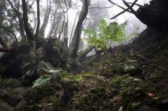 Het bos van La Zarza royalty-vrije stock foto