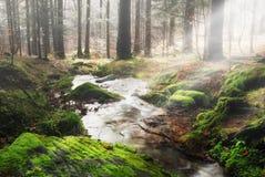 Het bos van Liten Royalty-vrije Stock Afbeeldingen