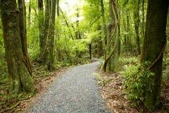 Het bos van Nieuw Zeeland Stock Foto's