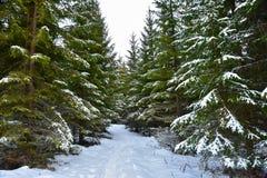 Het bos van Noorwegen Stock Foto's