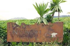 Het Bos van Nyungwe brengt onder royalty-vrije stock foto's