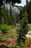 Het bos van Sequia royalty-vrije stock foto