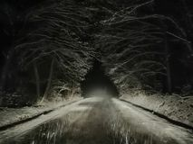 Het bos van het sneeuwonweer royalty-vrije stock foto