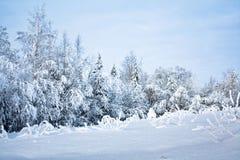 Het bos van Snovy Stock Afbeelding