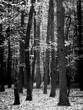 Het bos van Syberian Royalty-vrije Stock Afbeeldingen